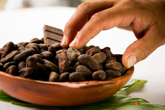 A bowl of cacao beans, the natural source of chocolate. Scientists say that cacao trees are under severe threat from warmer temperatures and dryer weather conditions.