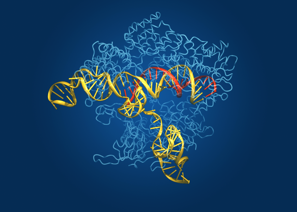 A computerized rendering shows the Cas9 gene-editing enzyme (in light blue) interacting with an RNA guide (red) and its target DNA (yellow).