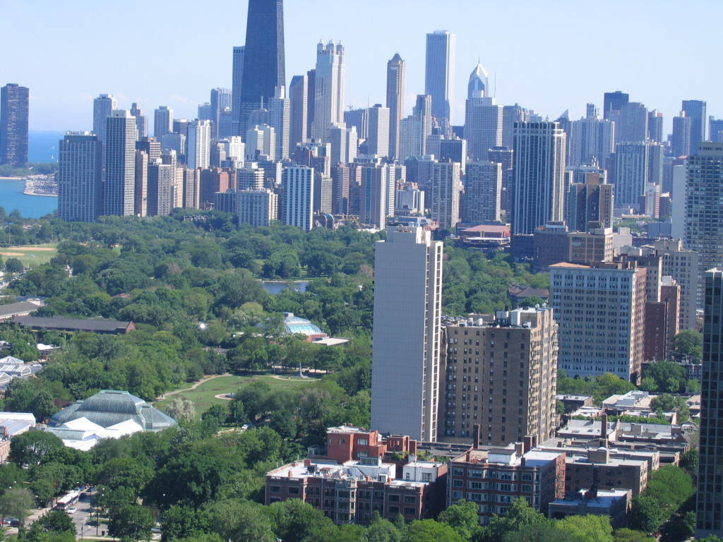 A view of trees in Chicago.