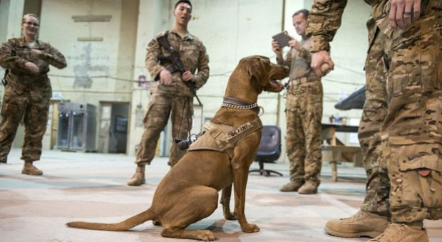 Members of the US 159 Combat Aviation Brigade medevac crews play with Major Eden, a morale dog, while waiting for a mission at Bagram Airfield some 60kms north of Kabul.