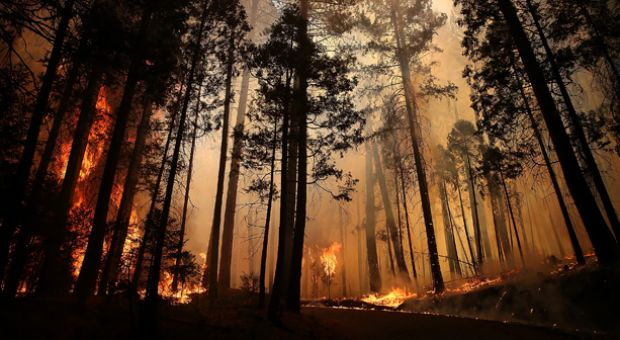 Flames from the Rim Fire consume trees on August 25, 2013 near Groveland, California.