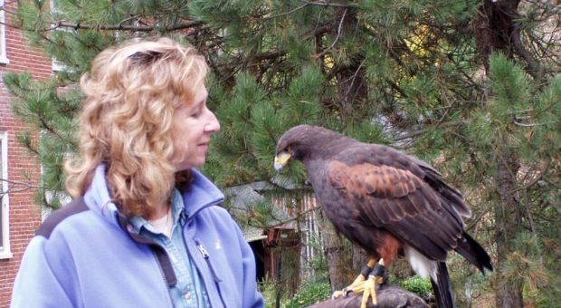 Sy Montgomery with Jazz, a Harris Hawk
